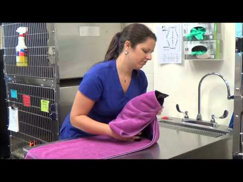 How to Towel Wrap a Cat