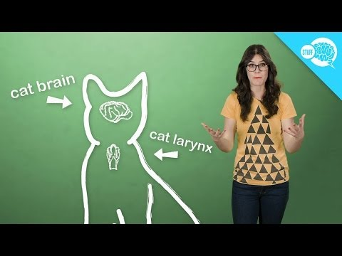 How (And Why) Do Cats Purr?