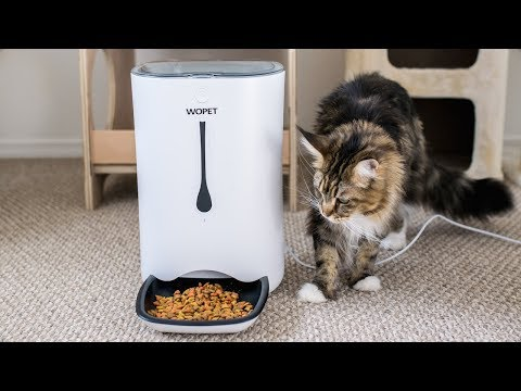 WOPET Automatic Pet Feeder Setup and Review
