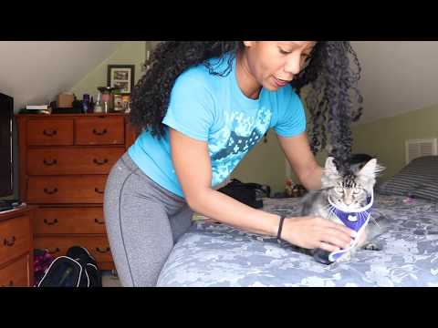 HOW TO   PUT HARNESS ON A CAT