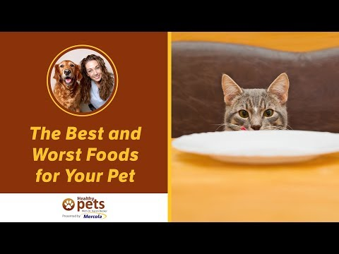 The Best and Worst Foods for Your Pet