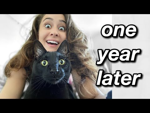 IS IT WORTH IT?: Tried the one fast cat wheel for a full year