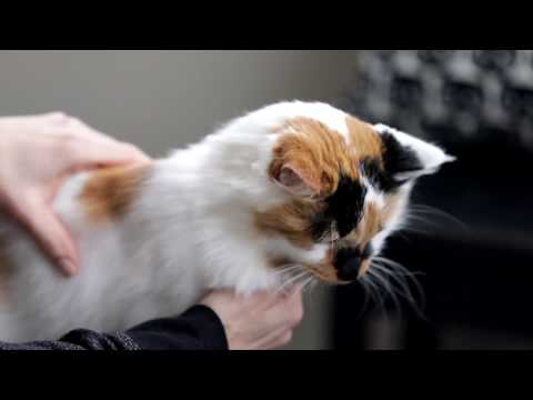 Cat DNA Test by Basepaws   We made a deal on Shark Tank show!