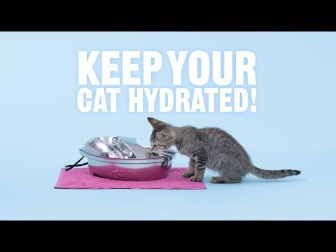 How Do I Get My Cat to Drink Water   Chewy