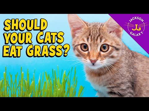 The Scoop on Cats and Grass: Is it safe? Is it healthy?