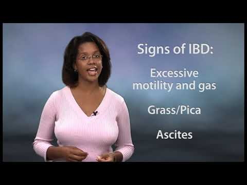 Gastrointestinal Diseases in Cats - Inflammatory Bowel Disease