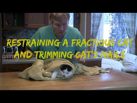 How To Restrain a Fractious Cat and Trim Cat Nails