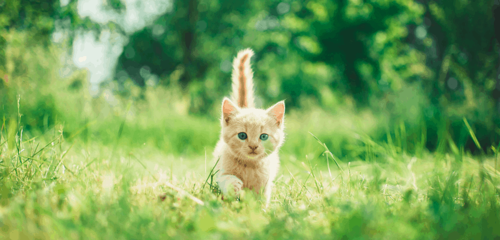 kitten walking in the grass