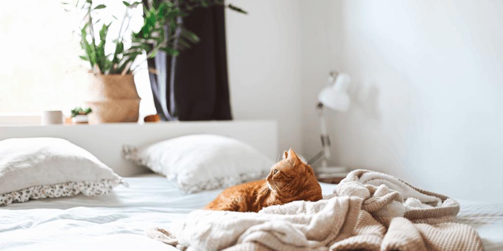 Ginger tabby cat on white bed.