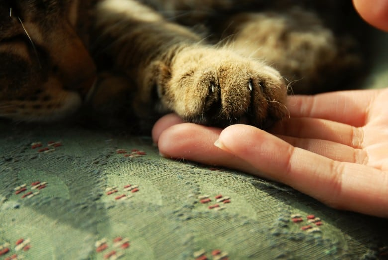 Person holding a cat's paw.