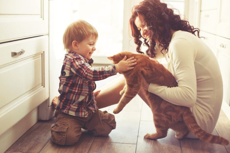 FIV+ cat getting love from a little boy.