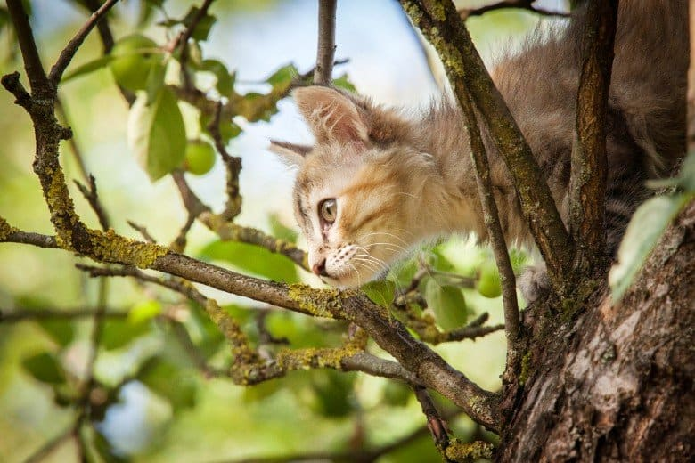 A kitten surveys the world from high up in a tree.