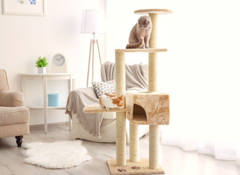 Best cat tree for large cats.