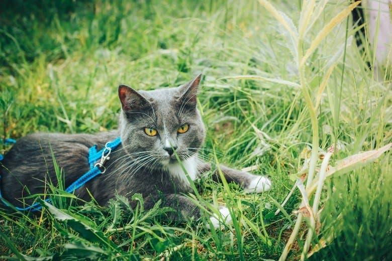Escape proof best cat harness.