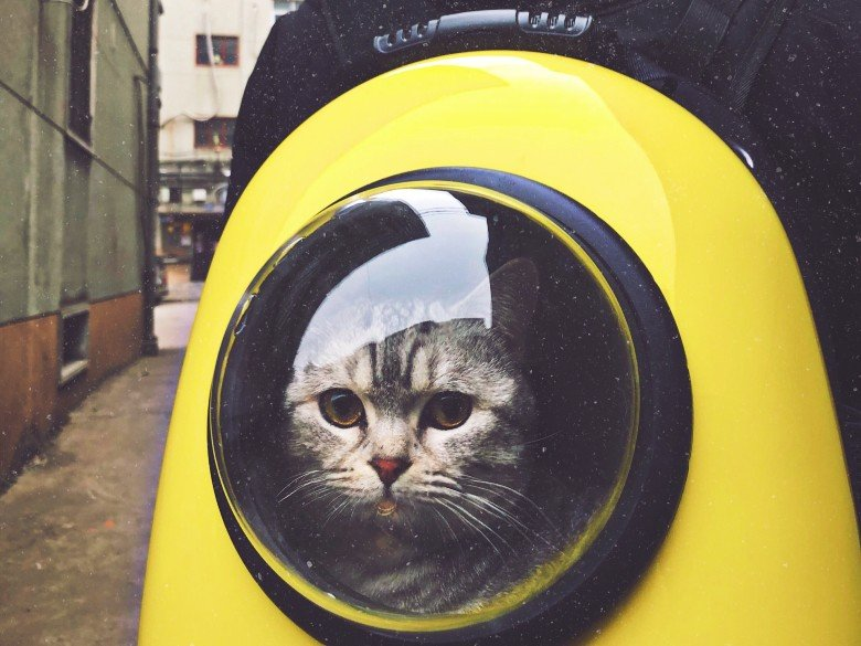 Cat in a yellow cat backpack peers out its window.