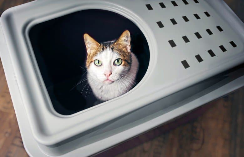 Cat in a top entry litter box.