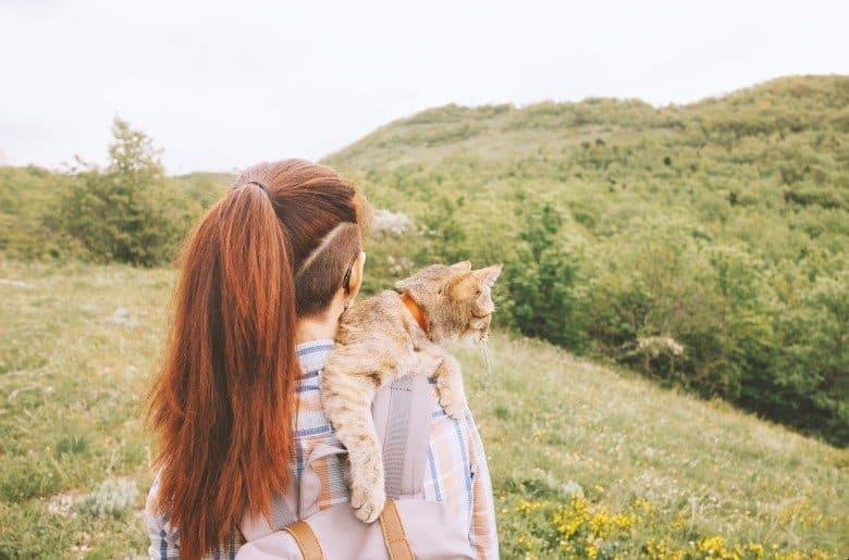 Orange tabby cat adventurer traveler.