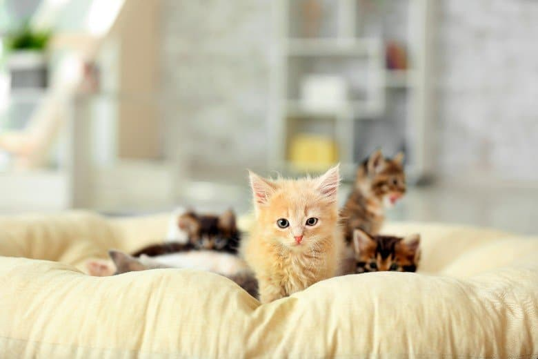 Kittens may not use a top entry litter box.