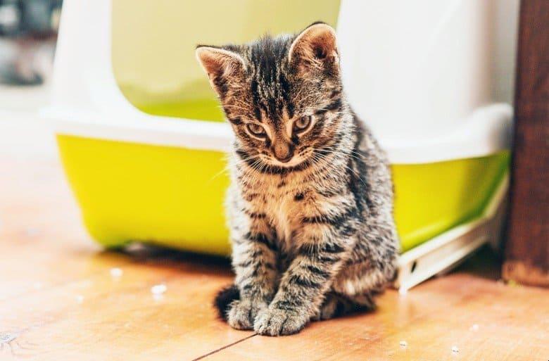 Kitten making a mess with cat litter.