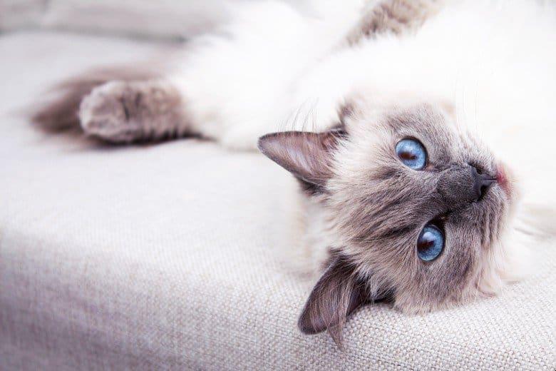 Best grain free cat food for indoor cats