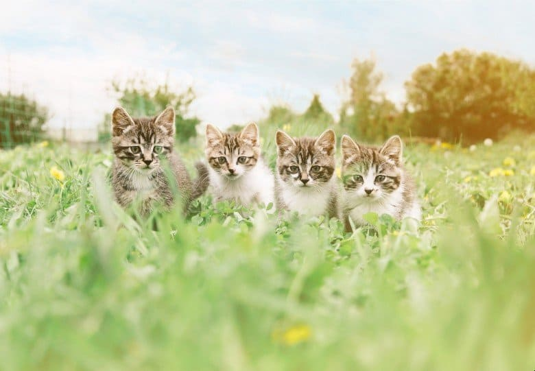 Four kittens in the grass.