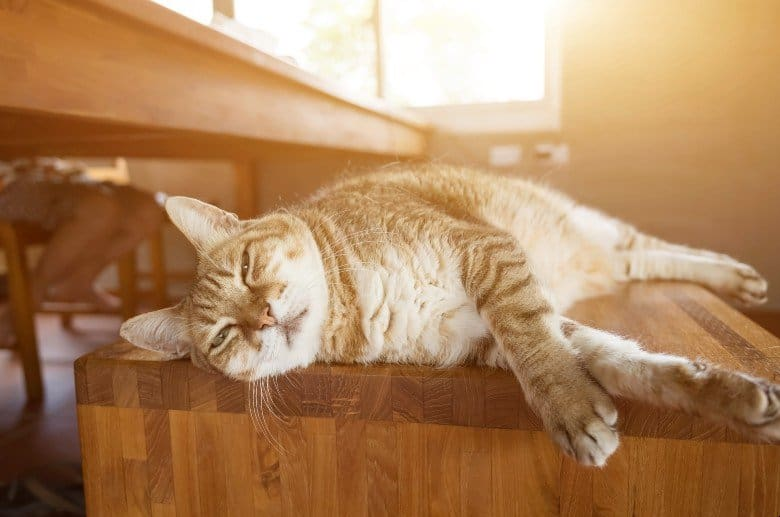 Low carb cat foods