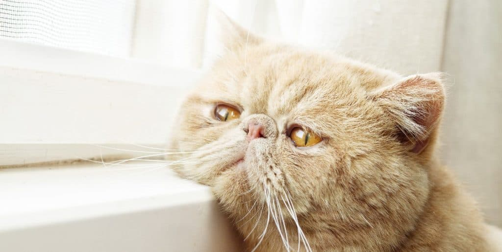 Soft dry cat food for cats with no teeth