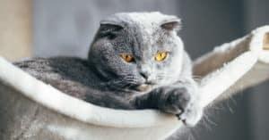 How do indoor cats get fleas