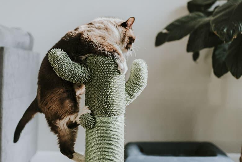 cat mange indoors